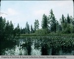 Wild Duck Pond near Cheney, Washington by Otis W. Freeman