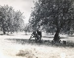 Mortars by U.S. Army Signal Corps Photographer