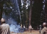 Man dousing tree with water by Edgar W. Weinberger and United States. Army Air Forces