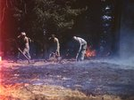 555th Parachute Infantry members shoveling near burnt forest floor by Edgar W. Weinberger and United States. Army Air Forces