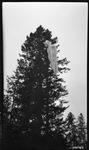 Parachute in tree by David P. Godwin