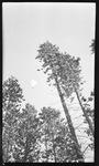 Practice timber jump by David P. Godwin