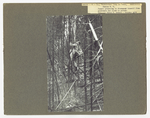 Timber jump and lodgepole hang up by David P. Godwin